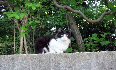 2010.05.16-うちの猫ども (93).JPG
